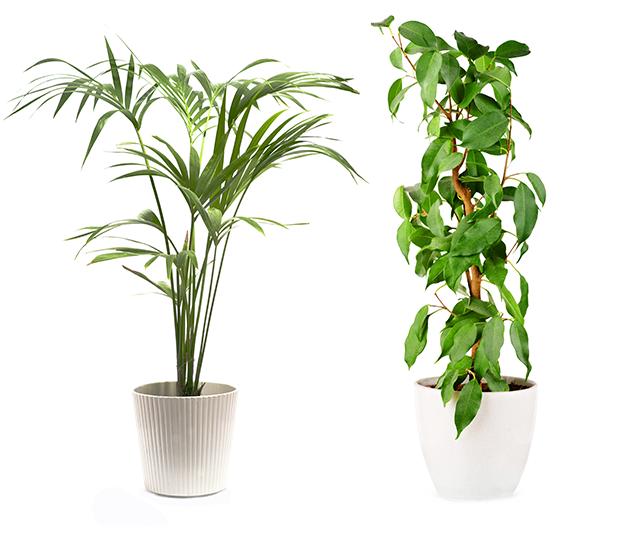 C'DECO conseils plantes et jardins, aménagement paysager, plantations et gazons