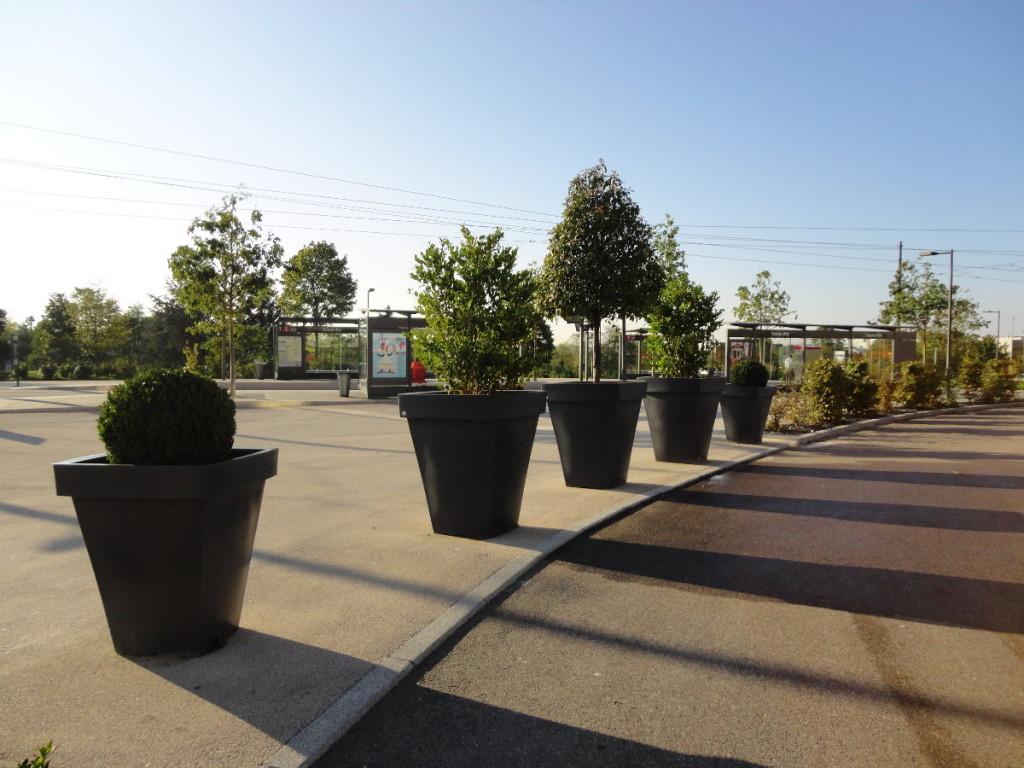Location de plantes annuelle, aménagement espaces verts intérieur. C'DECO paysagite Dijon Côte d'Or