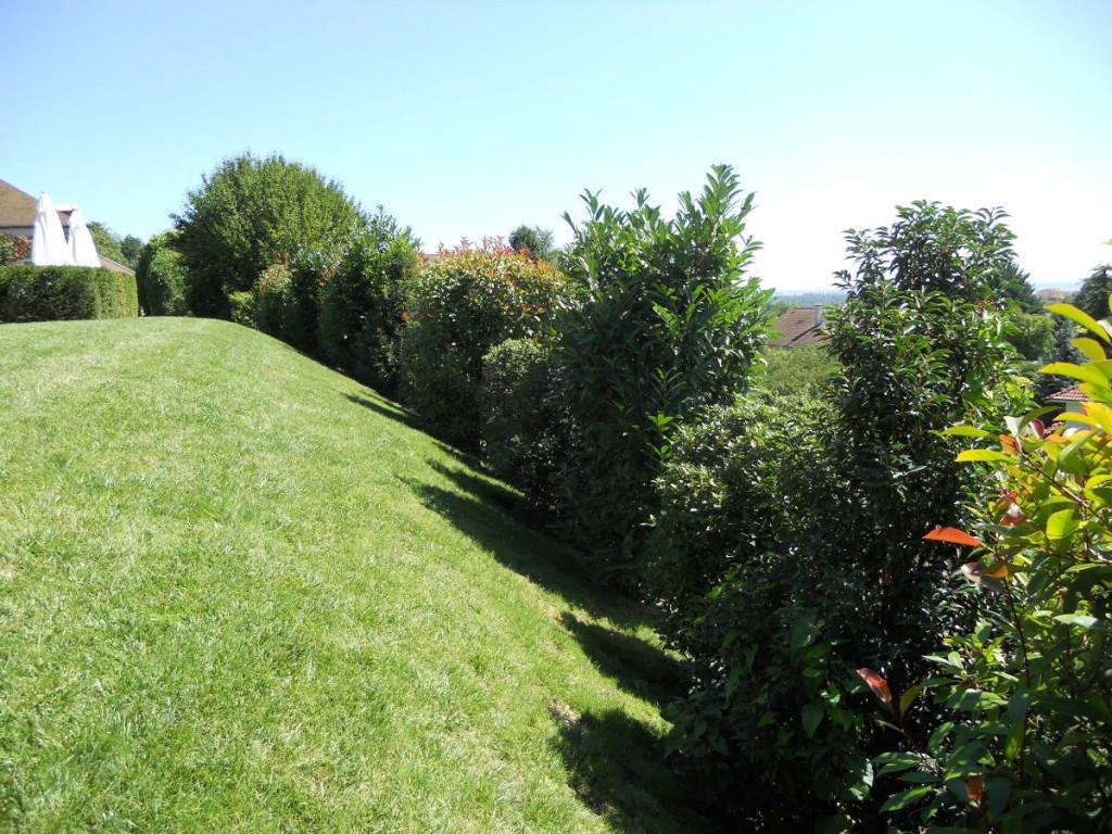 Entretien de jardins en Côte d'Or, forfait annuel, à Dijon - C'DECO paysagiste