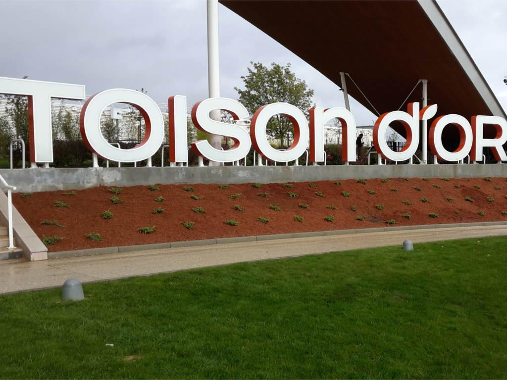 La toison d'or Dijon, plantations et aménagement paysager. Paysagiste Dijon, C'DECO paysagiste